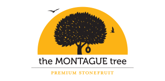 the MONTAGUE tree